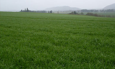 silage_pasture